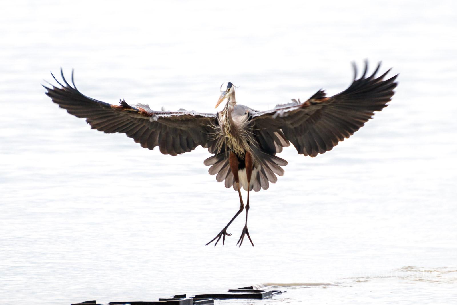 Bird and Nature News